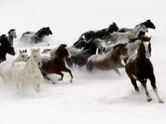 chevaux-dans-neige.jpg